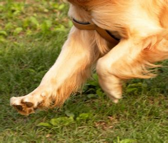 do dogs knees keep your s knees safe and healthy