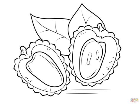 lychee fruit drawing lychee cross section coloring page free printable