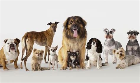 Small Home Pet Dogs San Diego