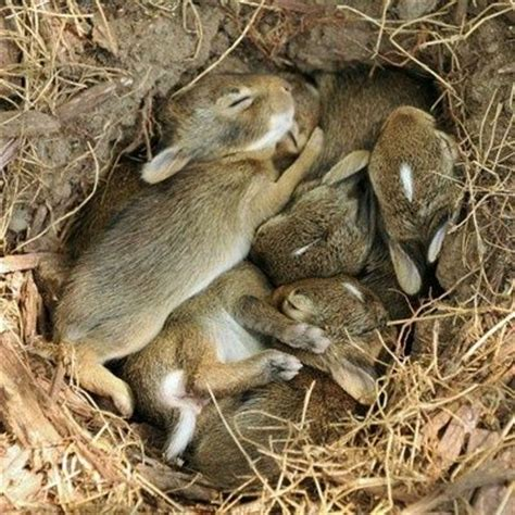 this is a rabbit hole! with a lot of rabbits!   cute