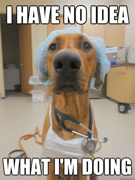 No Idea Meme - i have no idea what i m doing dr dog quickmeme