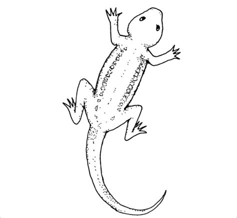 Lizard Template