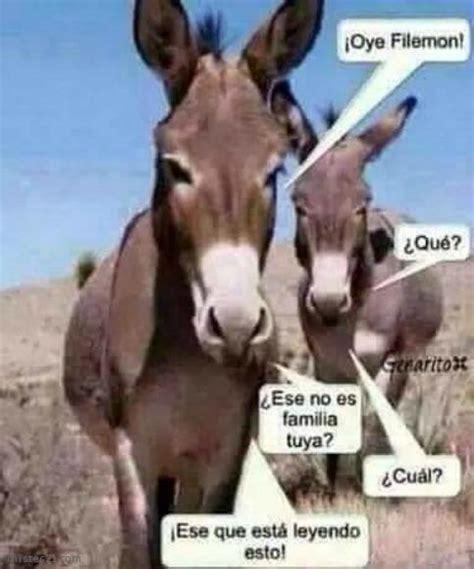 imagenes graciosos de burros chistes y an 233 cdotas de burros