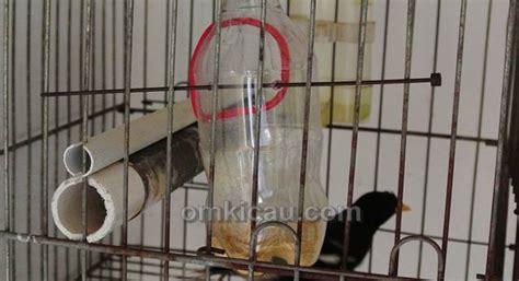 Tempat Wadah Pakan Burung membuat tempat pakan dan tempat minum alternatif dari