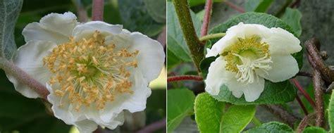 fiori ermafroditi atlante di botanica sistema riproduttivo