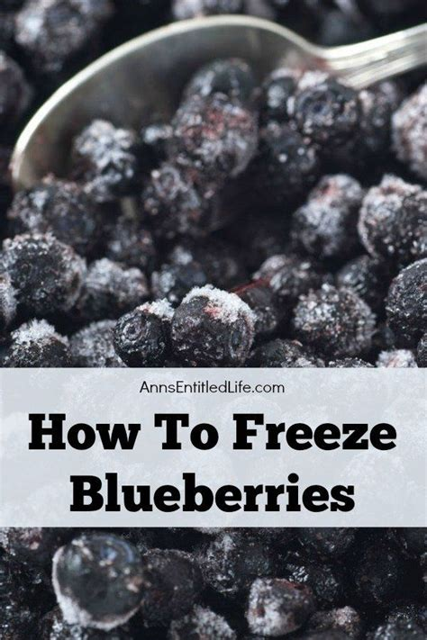 how to freeze blueberries whether store bought or picked fresh in your backyard summer
