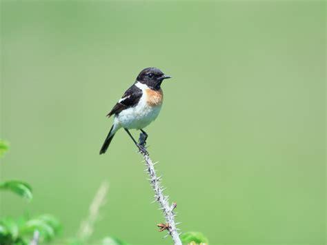 wallpaper burung2 cantik foto foto burung kecil yang imut dan cantik