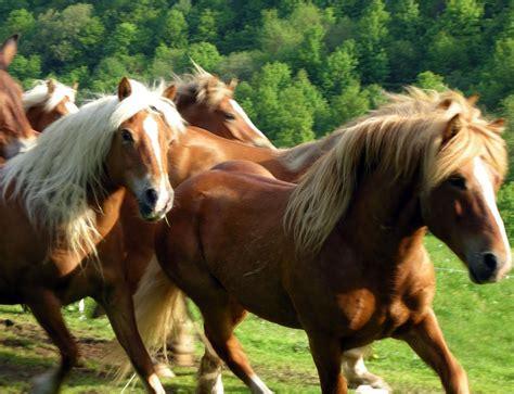 vendita cobasso subito cavalli in vendita hairstylegalleries