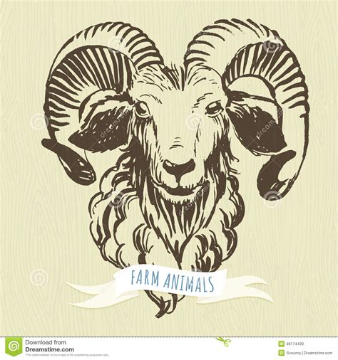 marker hand drawn farm animals ram sheep stock