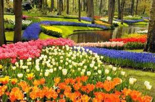 Flowers Garden Pictures How Did Flowering Plants Evolve To Dominate Earth Sciencedaily