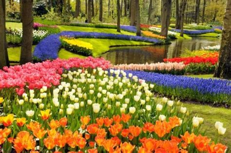 Image Of Flower Garden How Did Flowering Plants Evolve To Dominate Earth Sciencedaily