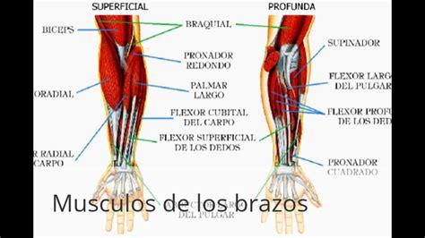 imagenes educativas del cuerpo humano cuerpo humano con sus partes youtube