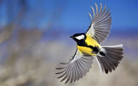 wallpapers flying birds wallpapers
