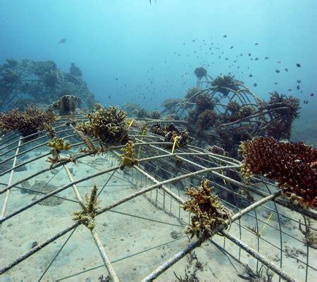 Artificial Coral 024 biorock project the gili islands
