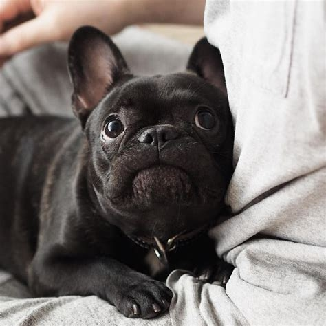 when should i neuter my puppy when should i spay or neuter my sarasota veterinary center