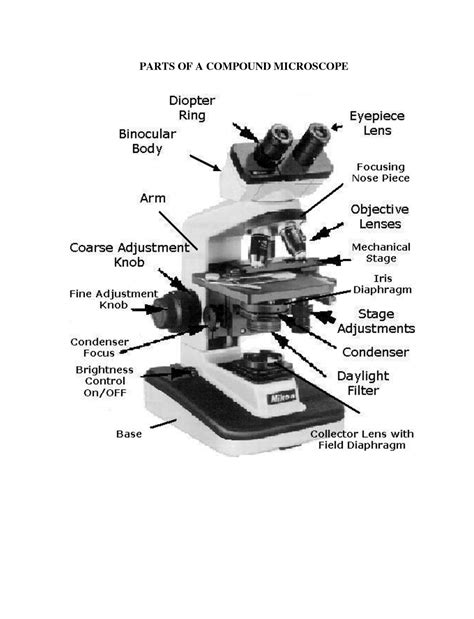 compound light microscope diagram worksheet 19 best images of parts of a compound microscope worksheet