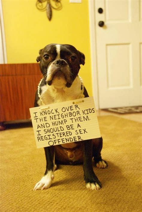 Dog Shaming Meme - 17 best images about i love dogs shaming on pinterest