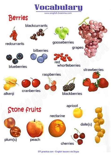 d fruit names single fruits images with names www imgkid the