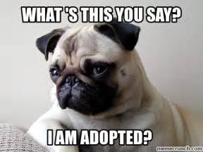 Pug Meme - funny pug meme