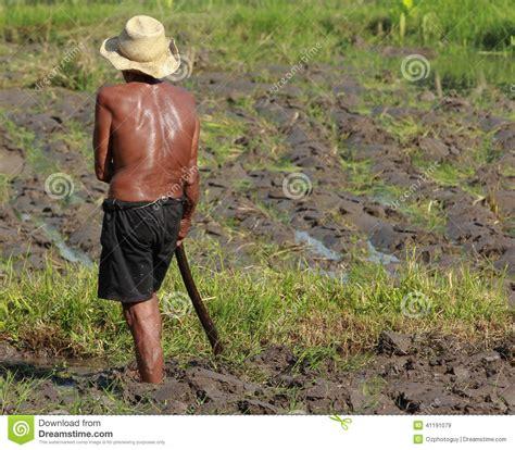man farming editorial stock image image
