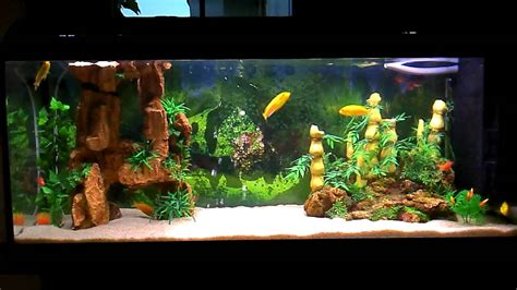 beautiful home fish tanks most beautiful aquarium 2a mykonosexplorer com youtube