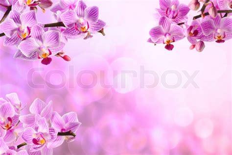 orchideen gestell pink orchidee auf dem rosa hintergrund stockfoto