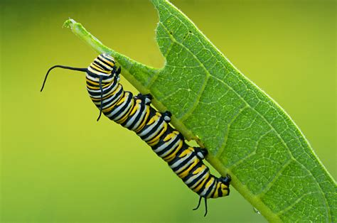 caterpillar italia sede opiniones de caterpillar