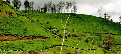 bookmyshow luxe magical kerala 8 days kerala tour package luxoindia