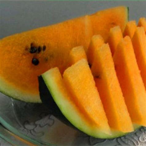 colorful watermelon fruit seeds jack seeds