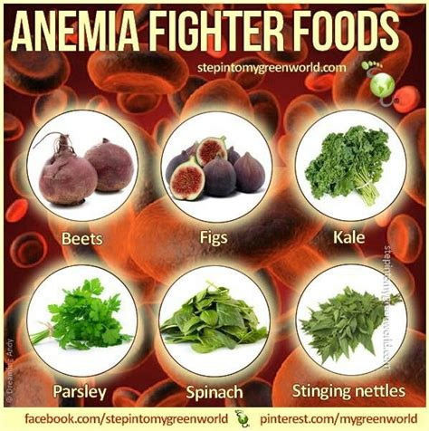 7 Ways To Prevent Anemia by 17 Best Images About Blood On Blood Cells