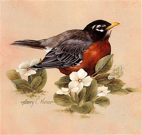 Painting Songbirds With Sherry C Nelson 37 best watercolor birds tutorials images on