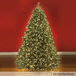 the world s best prelit douglas fir 9 5 full led