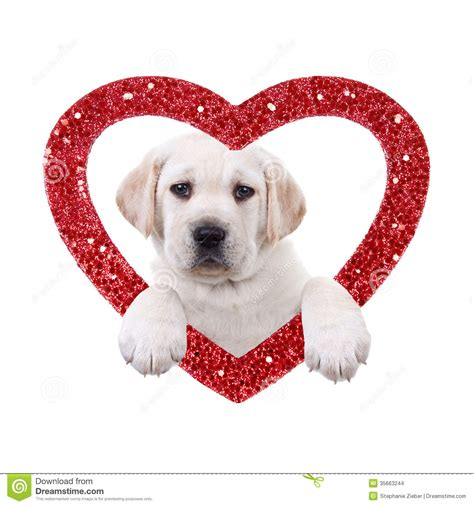 valentines puppy puppy and glitter images litle pups