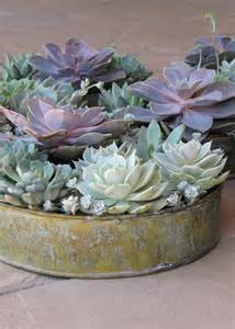 succulent centerpieces 24 succulent centerpieces for your reception table weddingomania