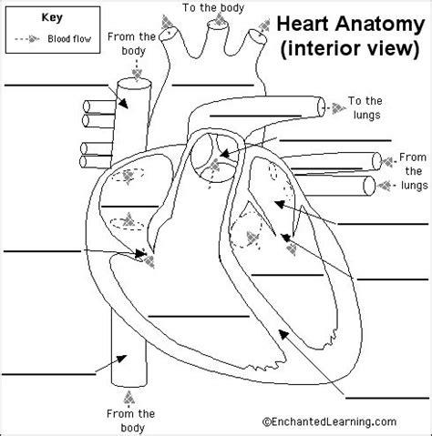 enchanted learning  heart anatomy diagram human heart diagram heart diagram heart anatomy