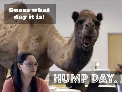 17 best ideas about hump day commercial on pinterest