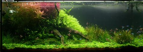 aquascape plants suitable plants aqua rebell