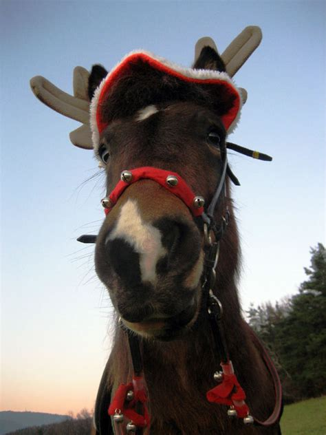 katharina die gro e pferd gestell frohe weihnachten bild foto katharina ge aus