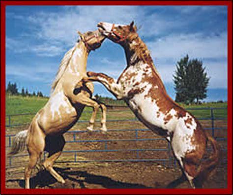 Giveaway Horses Qld - other horses al wild