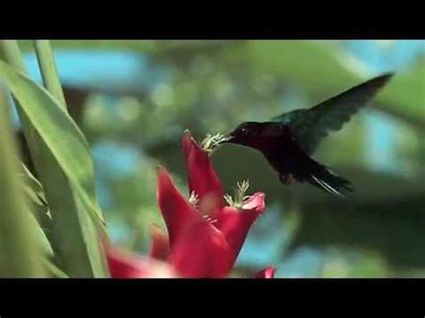 imagenes en movimiento de la naturaleza naturaleza en movimiento youtube