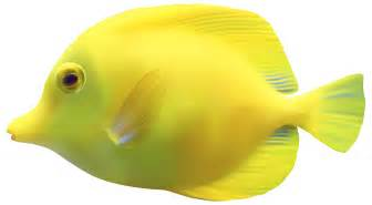 yellow zebrasomatang fish png clipart best web clipart