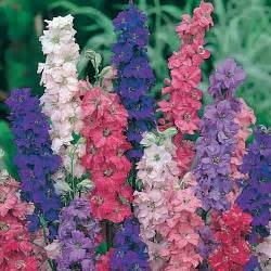 wilko seeds larkspur giant imperial mixed at wilko com
