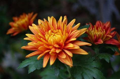 yoyon blog berapa nama bunga   kenal  jenis