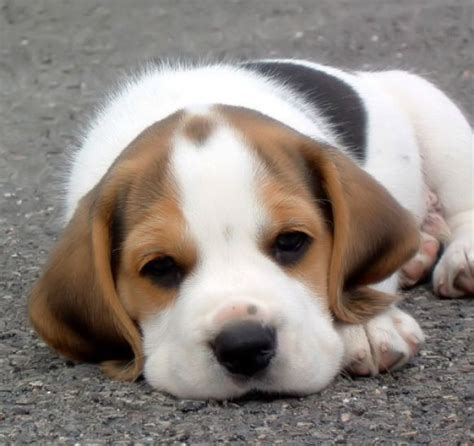 pictures of really puppies really dogs wallpaper