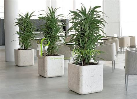 office plant decoration kl office plants interior landscaping tropical office plants live artificial plant displays