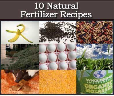 natural homemade organic fertilizer recipes garden
