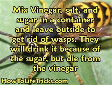 How To Get Rid Of A Beehive In Your Backyard by 25 Best Ideas About Killing Wasps On Wasp