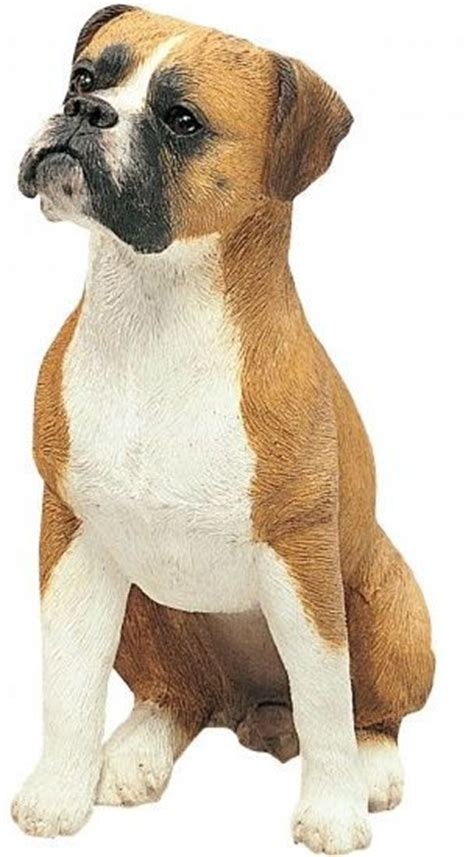 boxer puppies san diego boxer dogs boxers and san diego on