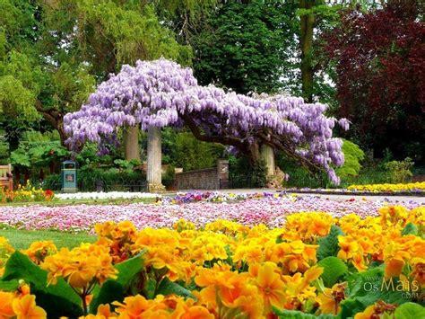 flores de jardin flores para jardim o seu jardim pode ficar bem colorido