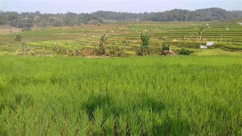 Jual Sho Kuda Daerah Jogja tanah dijual jual tanah sawah daerah gunung pati semarang